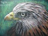 陳靜雯繪畫作品《紅鳶鷹》