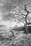 李業福攝影作品《茶畢歸來》