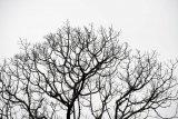 李業福攝影作品《說不出的靜》