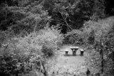 李業福攝影作品《孤島》