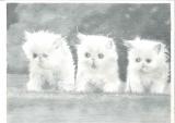 郭啟業素描作品《三隻小貓》