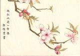郭啟業國畫作品《桃紅又是一年春》